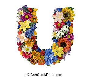 flor, alfabeto, -, u