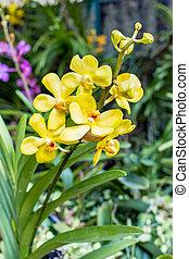 flor, amarela, orquídea