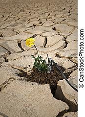 flor amarilla, agrietado, tierra, irrigación