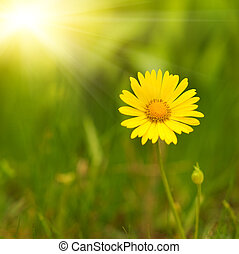 flor amarilla, encima, verde, fondo velado