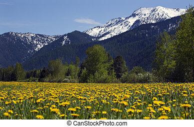 flor amarilla, granja, nieve, montaña, campo, montana