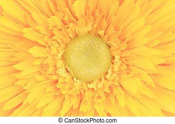 flor amarilla, núcleo, closeup.