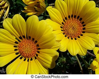 flor, amarillo