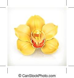 flor, amarillo, orquídea