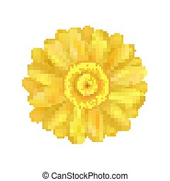 flor, amarillo, vector, ilustración, margarita, zinnia