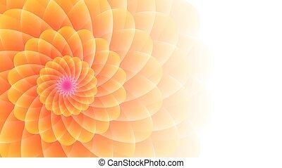 flor anaranjada amarilla, en, un, wight, fondo.