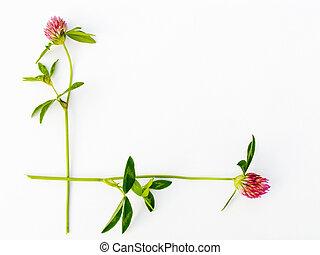 flor, armazón