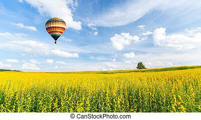 flor azul, campos, encima, cielo, amarillo, aire, caliente, ...