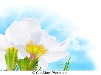 flor azul, primavera, céu, sol, borda