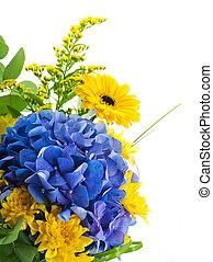 flor azul, ramo, amarillo, hydrangeas, ásteres, plano de ...