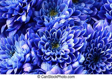 flor azul, textura, detalles, plano de fondo, o