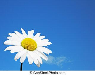 flor blanca, cielo