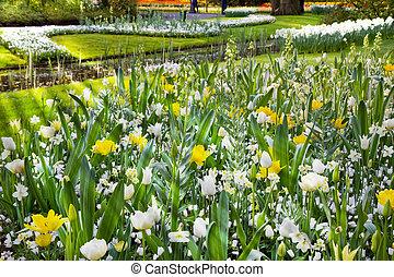 flor blanca, jardín, en, primavera
