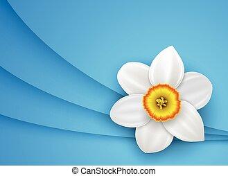 flor blanca, plano de fondo