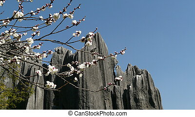 flor, bosque, piedra, blanco, shilin
