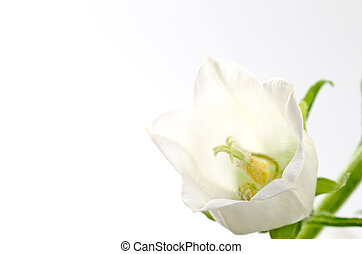 flor branca, sino