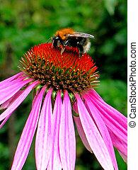 flor, bumblebee