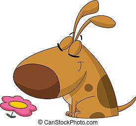 flor, cão, cheirando