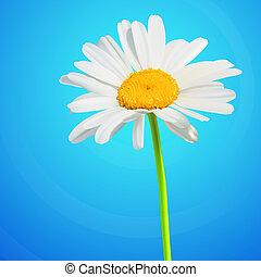 flor, camomila, flor, ilustración, fondo., vector, margarita