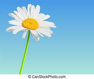 flor, camomila, naturaleza, fondo., vector, flor
