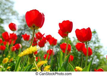 flor, campo