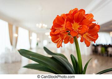 flor, casório