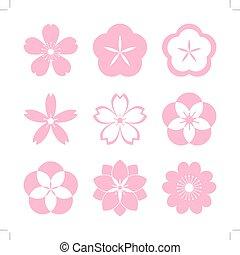 flor cereja, ícone, set.