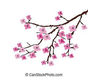 flor, cereza