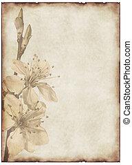 flor, cereza, papel, viejo, plano de fondo
