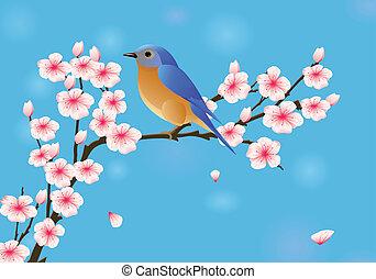 flor, cereza, robin
