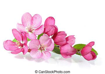 flor, cereza, rojo