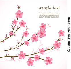 flor, cereza, tarjeta