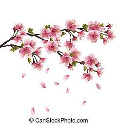 flor, cerezo, sakura, japonés