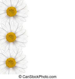 flor, chamomile