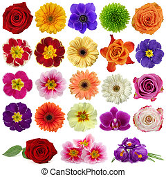 flor, colección
