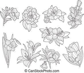 flor, collection., ilustração, mão, vetorial, desenhado