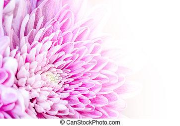 flor, coloridos, macro, detalhe, fundo, florescer, branca
