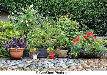 flor, contenedor, jardín