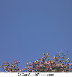 flor cor-de-rosa, árvore