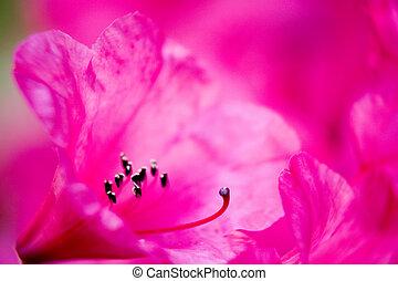 flor cor-de-rosa