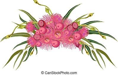 flor cor-de-rosa, gumtree, arranjo