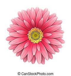 flor cor-de-rosa, render, -, isolado, margarida, branca, 3d