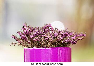 flor cor-de-rosa, roxo, flowerpot, -, fundo borrado, violeta