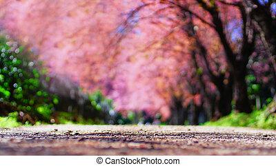 flor cor-de-rosa, túnel, árvore obscurecida, fundo