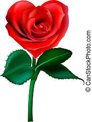 flor, coração