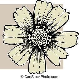 flor cosmos