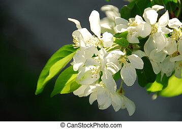 flor de apple