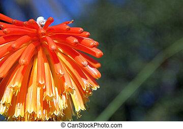 ma?ana soleada de invierno en en los jardines del parque de Montjuic, Barcelona, Catalu?a,Espa?a,Europa