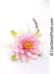 flor de loto, aislado, fondo blanco