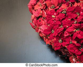 flor de nochebuena, planta, leaves., navidad, exhibiciones